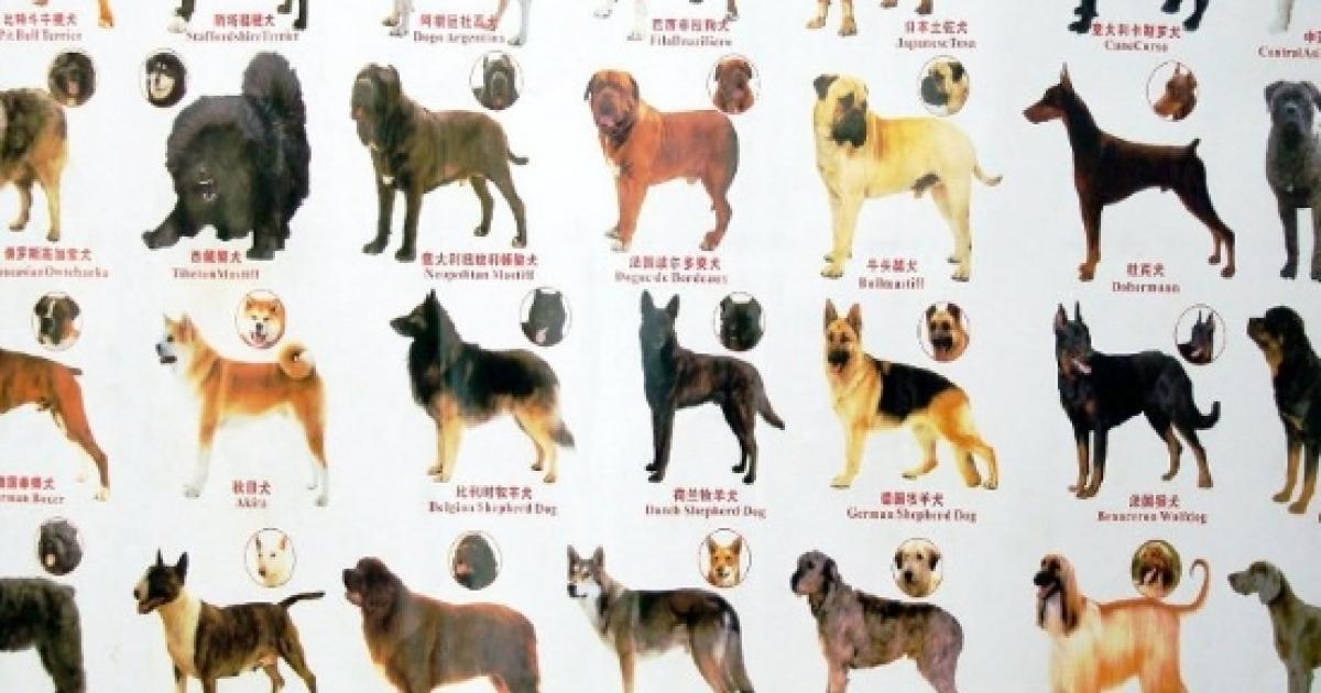 Cina Un Solo Cane Per Famiglia E 40 Razze Vietate