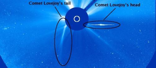 Comet 2011 Lovejoy, Sungrazer family. Credit: SOHO / NASA