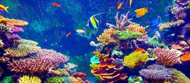 Los océanos son los principales responsables de que haya oxígeno en la atmósfera de la Tierra