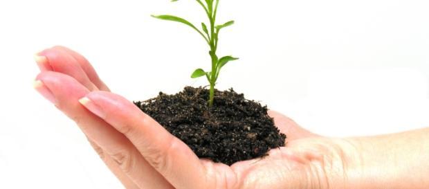 Mundial del Medio Ambiente 2012 - starmedia.com