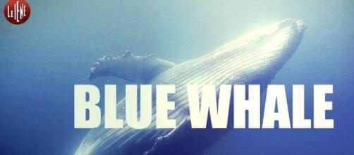 Le Iene sdoganano il Blue Whale?