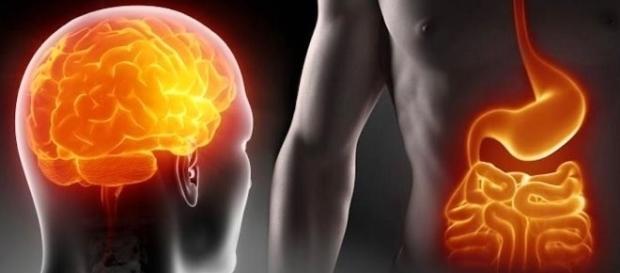 I probiotici agiscono su intestino e cervello, effetto dimagrante e sulla psiche.