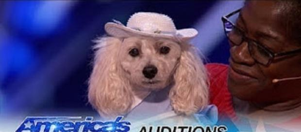 "Mia the counting Cockapoo and her human mom, Edna, gave an amazing math lesson in their ""America's Got Talent"" audition.--personal screenshot"