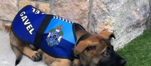 Cachorro é expulso da polícia por só querer brincar. (Foto: Reprodução Facebook)