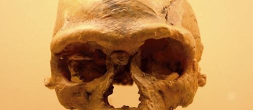 Uno dei crani ritrovati a Jebel Irhoud. (Photo Ryan Somma.)