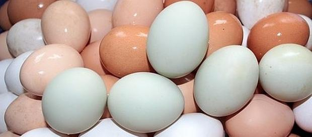 The differences between white and brown eggs - Photo: pixabay.com