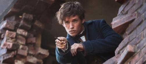 Newt Scamander, star of the 'Fantastic Beasts' films. Image from Flickr, courtesy of Warner Bros.
