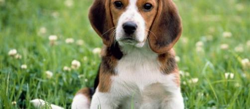 El amor incondicional de los perros. - pinterest.com