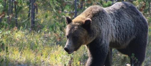Bear attacks teenage/Photo via Brad, Flickr