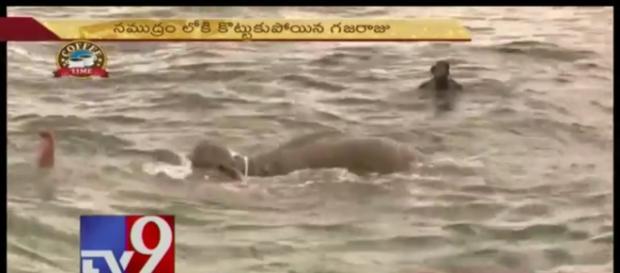 Sri Lanka navy divers save drowning elephant. Photo: YouTube, TV9 Telugu