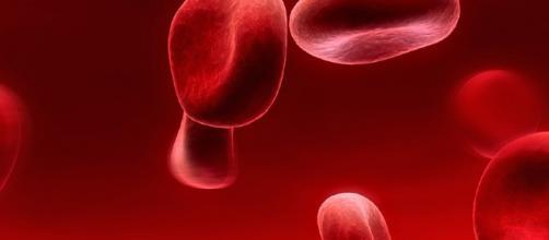Cnr. Nuova tecnica rivela che i globuli rossi sono lenti di ... - notiziefree.it