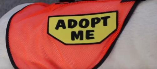 Hi Tor Animal Care partnered with Rockland Boulders (Image creditHi Tor Animal Care Center Shelter | YouTube)