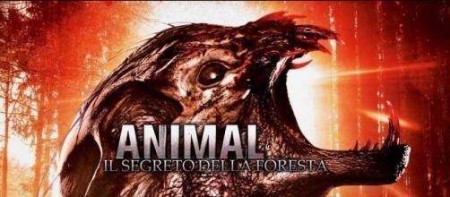 Animal - Il segreto della foresta in Streaming - infinitytv.it
