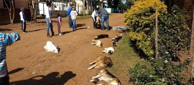 Cães foram mortos por envenenamento em cidade do interior no Rio Grande do Sul: caso está sob investigação (Foto: Reprodução / Facebook)