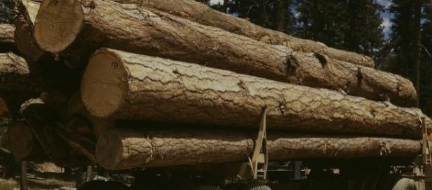 Lumber prices are expected to soar in BC (wikimedia.org)