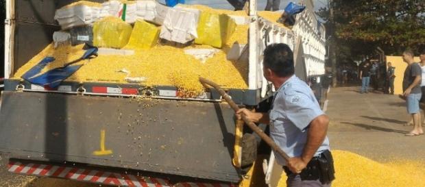 Policiais encontraram a maconha em meio a uma carga de milho - foto: Divulgação/Polícia Rodoviária