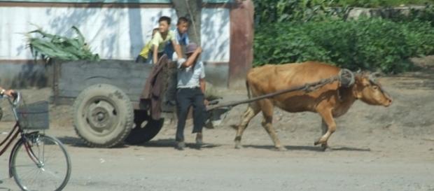 Everyday life in North Korea (credit – Nicor – wikimediacommons)