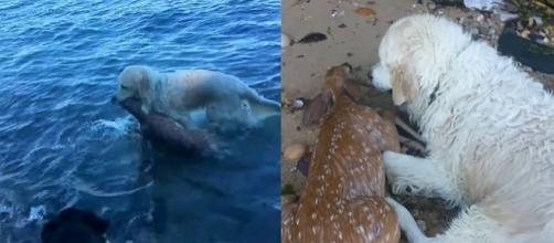 Photo Storm the hero dog saves a baby deer screen capture from YouTube/Mark Freeley