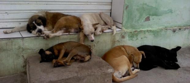 Animais em situação de abandono na grande São Paulo. ( Foto: Reprodução)