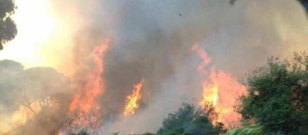 Le fiamme nella pineta di Castel Fusano, a Ostia (RM) - da Ansa.it