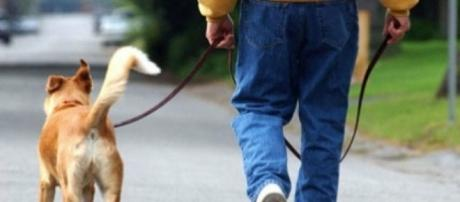 Problemas para pasear a tu perro? ¿O tu perro te pasea a ti?   Mascotas - facilisimo.com