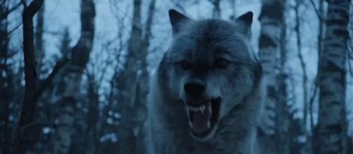 Arya and Nymeria reunion in 'Game of Thrones' season 7. Screencap: whycreate via YouTube