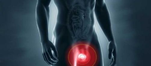 É nos testículos que o homem possui maior quantidade de proteína em seu corpo