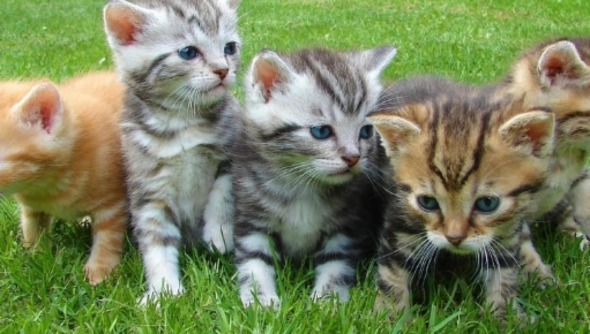 Having a bad day? These cute kitten videos will brighten your mood