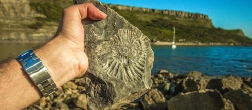 A 9-year-old boy discovered accidentally a fossil in Las Cruces, New Mexico [Image: Pixabay]