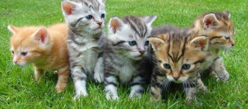 Adorable kittens -- Image via Pixabay