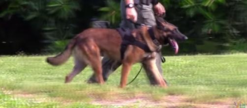 K-9 similar to Endy Image Extreme Trained & Disciplined Police Dogs - ViralBe| YouTube