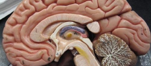 Scientists reverse brain damages in toddler / Photo via GreenFlames09, Flickr