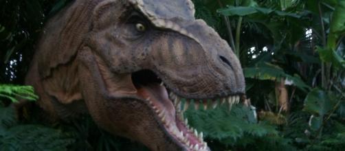 T.Rex could not sprint / Photo via Scott Kinmartin, Flickr