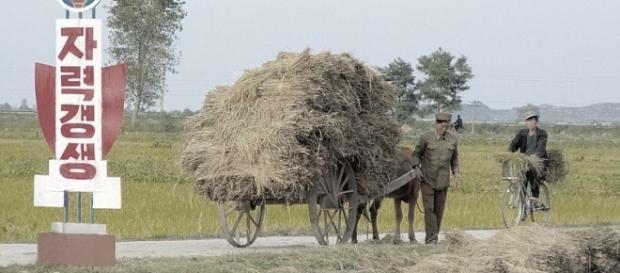 A cooperative Farm in North Korea (credit – Yeowatzup – wikimediacommons)