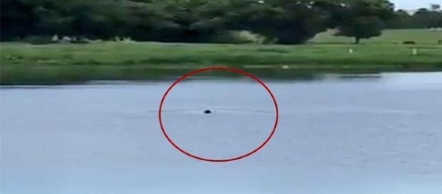 Homem morre afogado após entrar em lagoa (Foto: Captura de vídeo)
