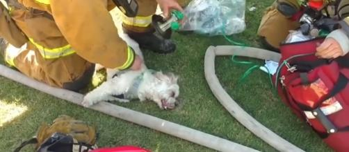 Photo Bakersfield firefighter revives dog saved from house fire screen capture from YouTube/IBTimes UK