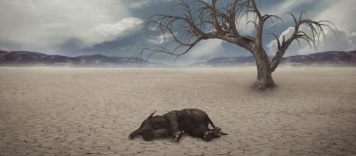 Free illustration: Drought, Desert, Elephant, Dry - Free Image on ... - pixabay.com