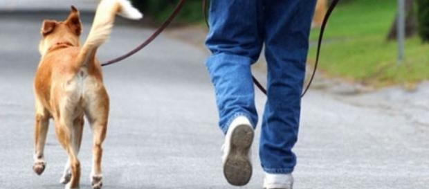 Le spese per gli animali domestici possono essere scaricate
