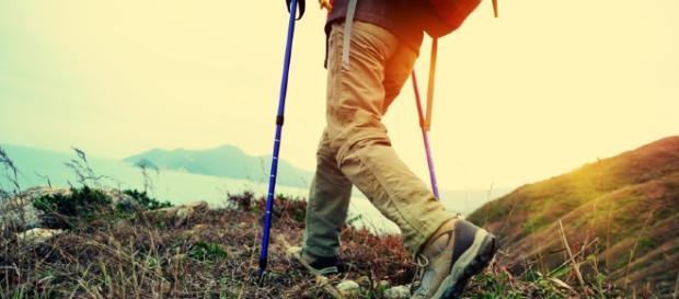 Zecche e vipere in montagna, cosa fare e come comportarsi