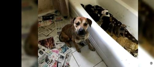 Among the 111 animals found was a bathtub full of puppies. [Image: YouTube/WFAA Media]