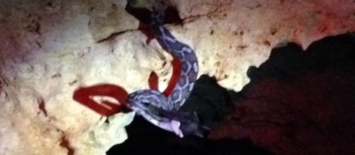 Serpiente colgante en la cueva.