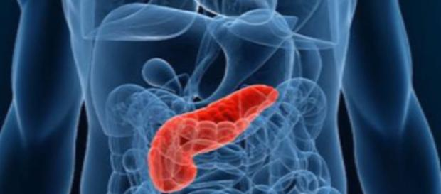 A picture of the pancreas - Lee Health via Vimeo