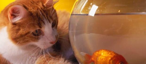Cuidemos con amor a nuestros gatitos y llevémoslos al Veterinario.