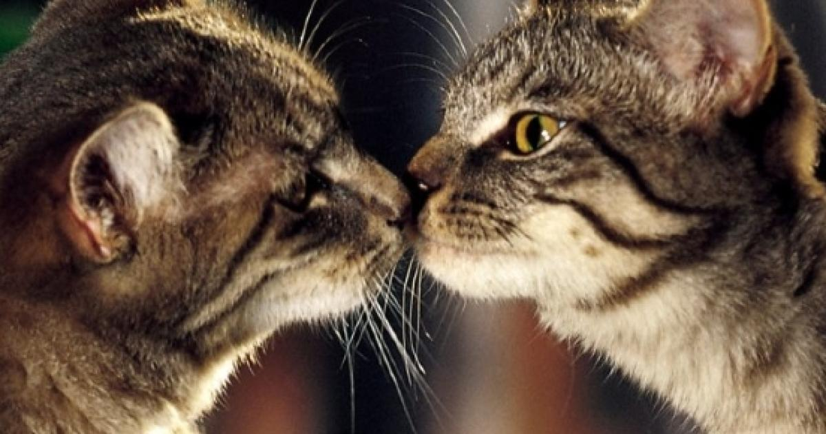 15 Fatti Curiosi Sui Gatti Che Probabilmente Non Sapevi