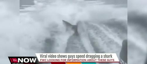 Video of shark being dragged behind speeding boat sparks outrage ..[Image source: Youtube Screen grab]
