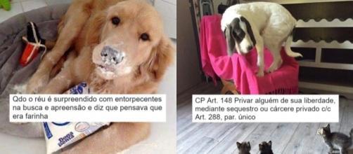Juíza usa fotos de animais para explicar leis (Foto: Reprodução/Twitter/Carolina Malta)