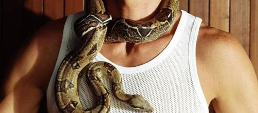 Caring for Pet Boa Constrictors - thespruce.com