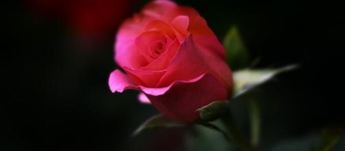 Daily Love Scope ... - pixabay.com