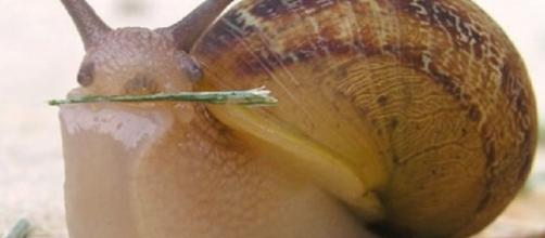 Cos'è lo sciroppo di lumaca - Cos'è, il blog per ogni tua domanda - xn--cos-8la.com