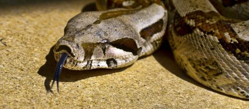 Firefighters rescue woman who had a boa constrictor wrapped around her head / Photo via Steve Slator, Flickr